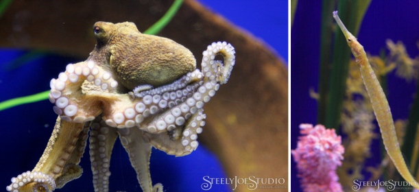 octopus and seahorse at tampa  bay aquarium