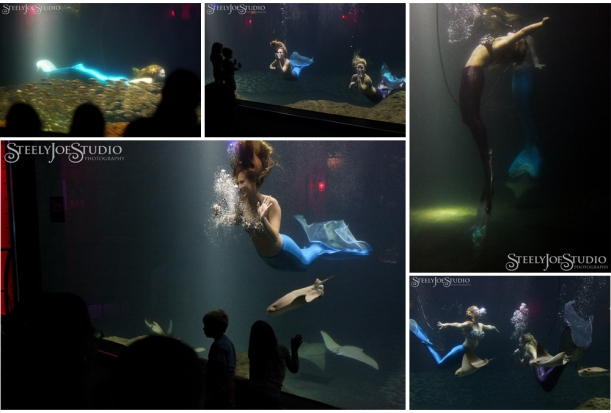 mermaids at Tampa Bay Aquarium